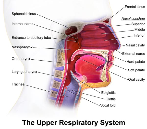 Upper Airway Resistance Syndrome (also known as UARS)